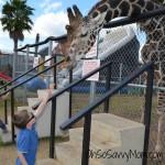 Louisiana State Fair Zoo animals