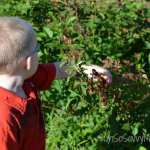 Not so Wordless Wednesday: Berry Picking at Blueberry Hill