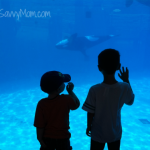 Wordless Wednesday: World of Wonder – SeaWorld San Diego