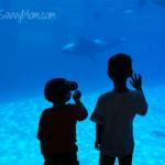 Wordless Wednesday: World of Wonder – SeaWorld San Diego