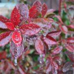 Louisiana Ice Storm – Wordless Wednesday