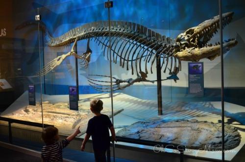 Perot Museum Natural History