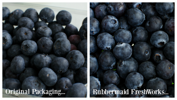 Rubbermaid FreshWorks test with blueberries